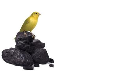 canary - Copy
